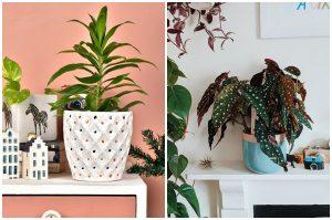 rastliny do detskej izby